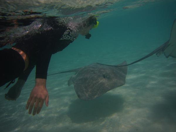 ラグーンサファリ:エイ エイの餌付け サメの餌付け   タヒチ 2008 旅行記